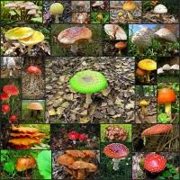 30mushroom-pictures