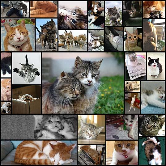 可愛い猫の画像がほしいなー33
