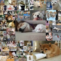 100眠れないから柴犬の画像貼ってく