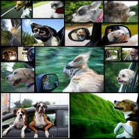 犬と車17