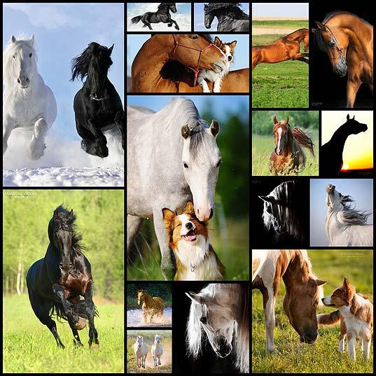 16beautiful-horses-by-vikarus