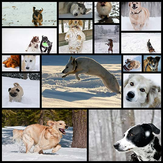 17dogs-in-the-snow