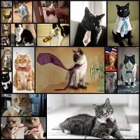 20120621-cats-got-ties20