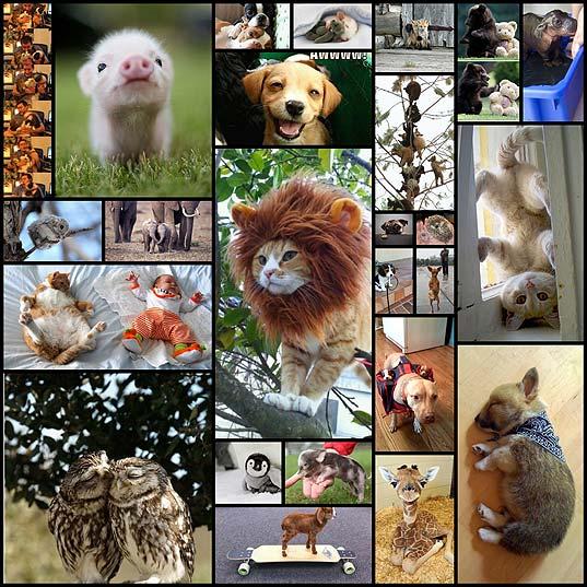 かわいい動物たちの写真25