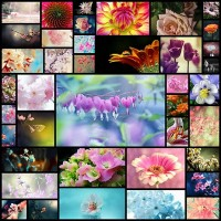 40the-art-of-nature-showcase-of-floral-photography