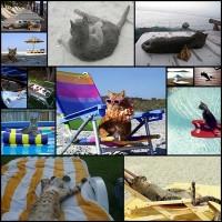 夏に向けて準備万端のネコ達15