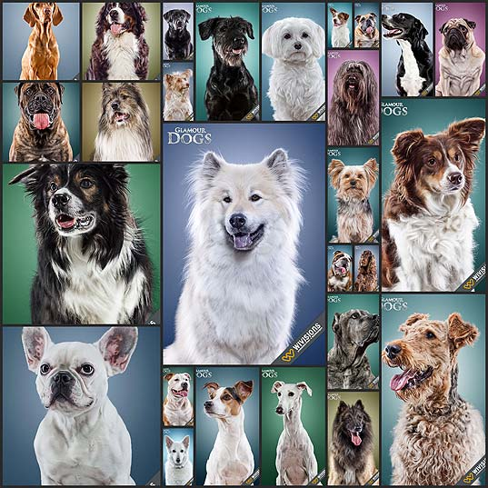 27glamour-dogs-by-patrick-wicki