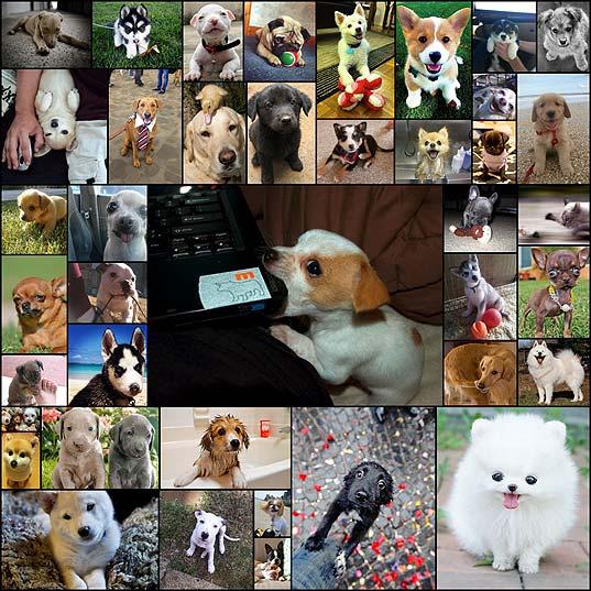 構わずにはいられない見つめる犬の画像401