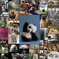 可愛い犬と猫と動物たちの画像45