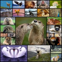 the-diversity-of-animal-kingdom25