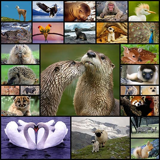 Image result for Characteristics of animals
