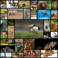 35-examples-of-inspirational-wildlife-photography