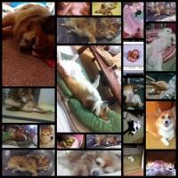 【速報】うちの犬の寝相が悪い【画像有り】22