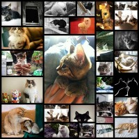 daily-awww-lol-im-just-kitten-27-photos
