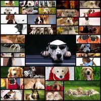 dog-wallpaper40