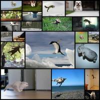 flying-animal20
