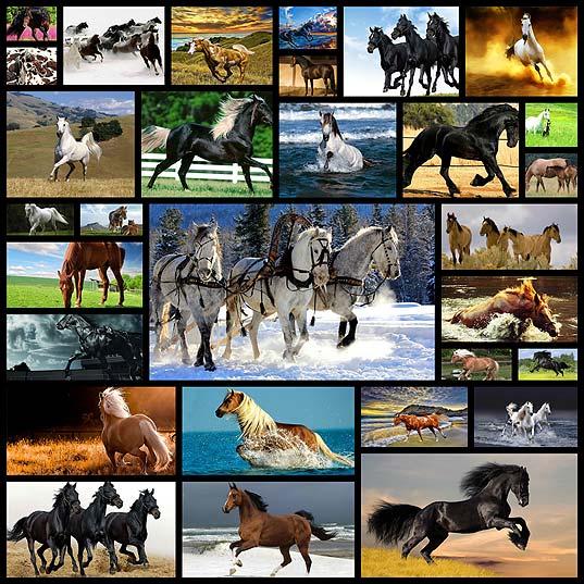 horse-wallpaper30