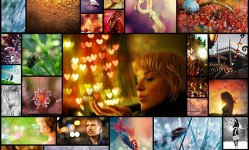 40beautiful-bokeh-photography-capturing-the-details-of-life-great-and-small