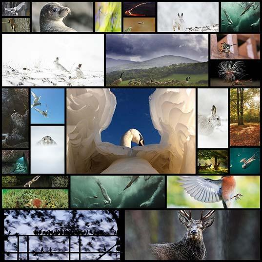 British-Wildlife-Photography-Awards27