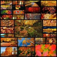 autumn-wallpaper30