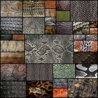 reptile-skin-texture33