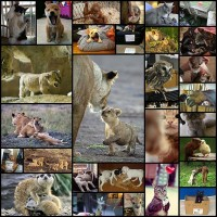 top_30_animal_pics_of_the_week