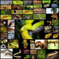 50_delightful_snakes