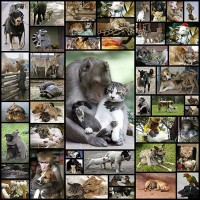 animal_couple45