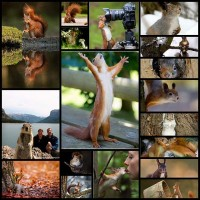 how-to-learning-wildlife-photography-squirrel-pictures20