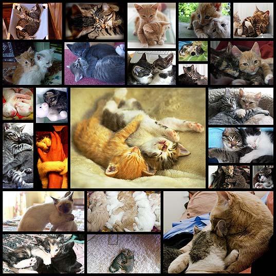 hug_cats25