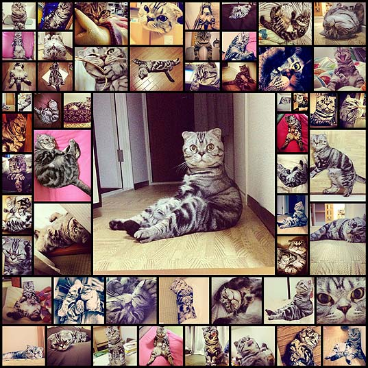 scottish_fold_cat_has_found_fame_on_instagram_56_pics