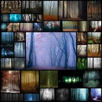 spooky-forest-picture-photography41