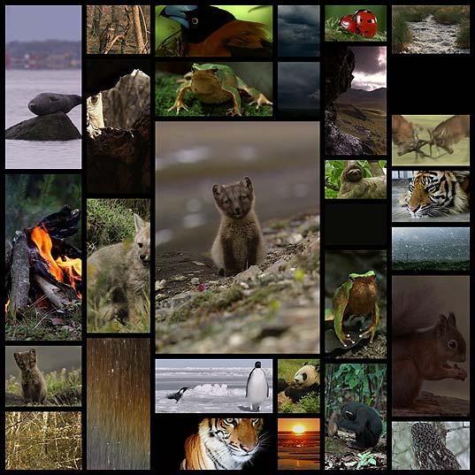 animirovannye-fotografii-prirody-30-gifok