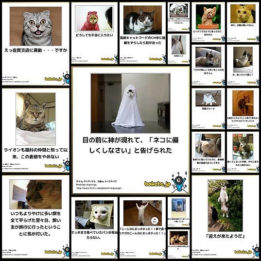 猫に関する人気ボケて(bokete)まとめ(21枚) , いぬらぼ
