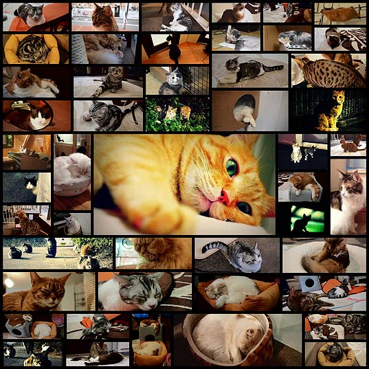 cats_cafe50