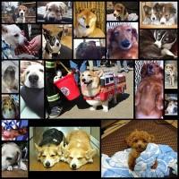 cutest_dog21