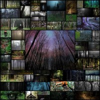 dense_and_gloomy_these_forests_make_a_scary_58_pics