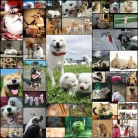 dogs_so_cute48