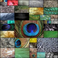free-feather-textures40