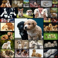 pictures-of-cute-puppies30