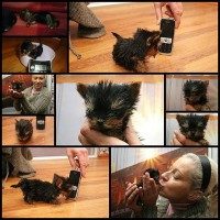 polish-terrier-meysi-is-worlds-smallest10
