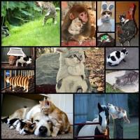 cat_zodiac12