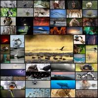luchshie-snimki-prirody-i-udivitelnyh-zhivotnyh-za-2012-god-53-foto