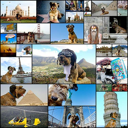 The-Amazing-Dog-Traveler