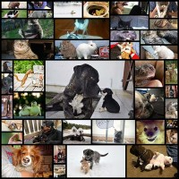 These-Funny-Animals-(43-pics)---Izismile