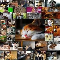 animal_photo46