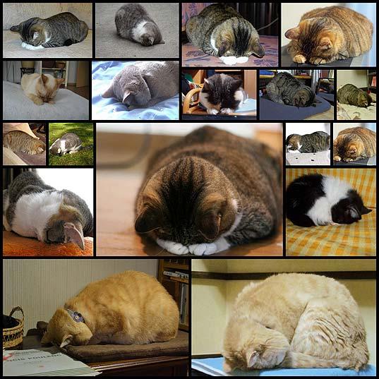 dogeza_cats19