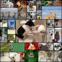 top_350_animal_pics_of_the_year_2012-_1