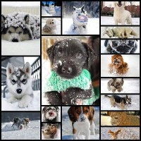 18-cute-photos-of-dog-playing-in-snow