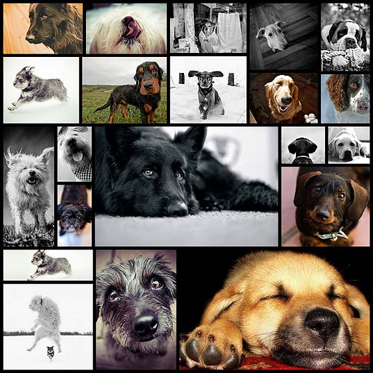 20-adorable-examples-of-dog-photography